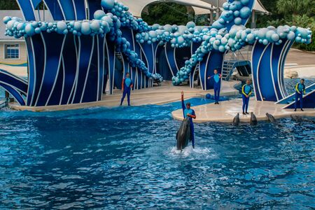Orlando, Florida. November 06, 2019. Trainer jumping on dolphin at Seaworld (33)