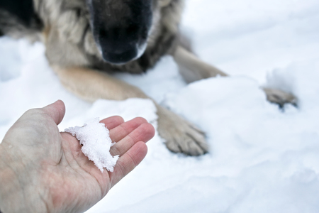 Male hand stretching out with snow, inviting a dog to play, outdoor shot with selective focus