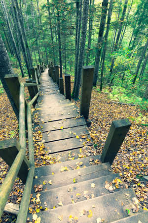 Hiking trail in the national park in autumn. Wooden steps on a steep slope in yellow leaves National park in Latvia. Sigulda