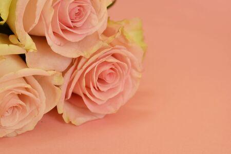 Foto de Blooming pastel flower buds. Romantic blank. - Imagen libre de derechos