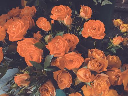 Foto de Roses on a sunny day outside. Close-up shot. - Imagen libre de derechos