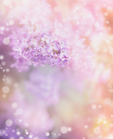Lilac flowers on beautiful bokeh background. Romantic pastel floral border