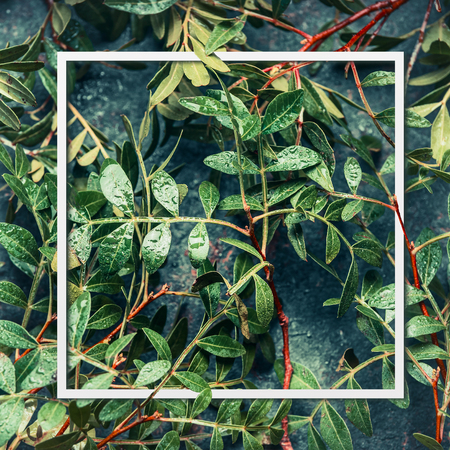 layout Frame of green leaves, top view . Vegetation nature background
