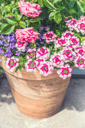 Terracotta container with Beautiful pink summer flowers: roses and verbena. Container gardening ideas
