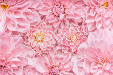 Pastel pink flowers background, top view, Layout  or greeting card for Mothers day, wedding or happy event