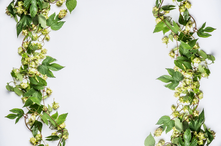 Twined hops vine frame with cones on white background, top view