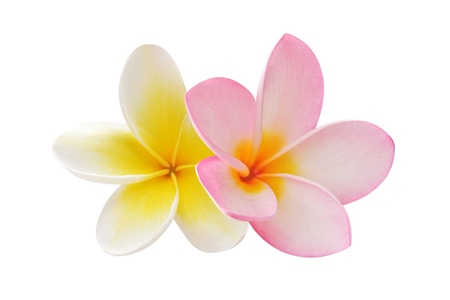Photo for Two frangipani flowers - Royalty Free Image