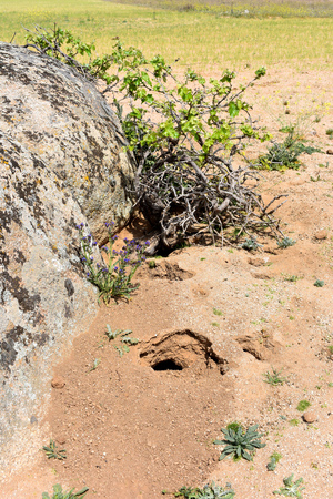 Some animal burrows in a vineyard field