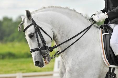 Photo pour white horse dressage - image libre de droit