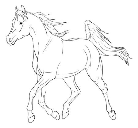 Arabian horse illustration isolated on white