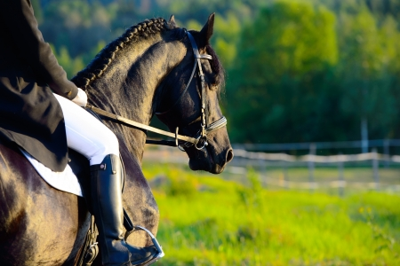 Riding on the black friesian horse in the sunset