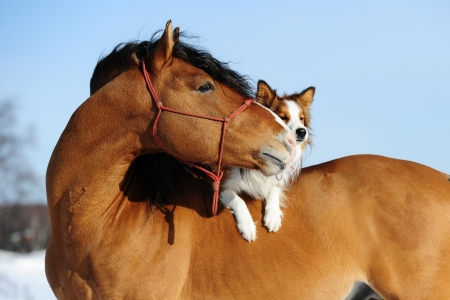 Red horse and dog are friends