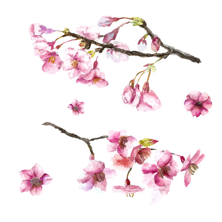 Illustration pour Watercolor cherry blossom. Hand draw cherry blossom sakura branch and flowers. Vector illustrations. - image libre de droit