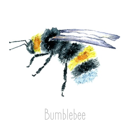 Illustration pour Hand draw watercolor Bumblebees In Flight Hand Painted. Set isolated on white background.vector - image libre de droit