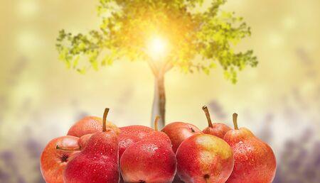 Foto für Ripe, juicy bartlett pears isolated on a blurred background. - Lizenzfreies Bild