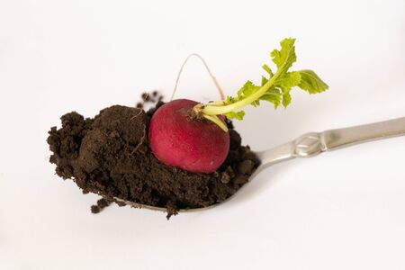 Photo pour spoon with ground and sprouted radish on it on a white - image libre de droit