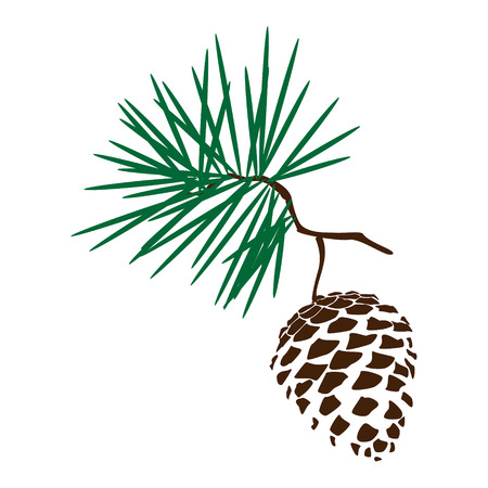 Vector illustration pinecone branch silhoutte icon. Pine cone wood nature