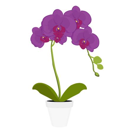 Illustration pour Exotic purple orchid houseplant potted flower. Phalaenopsis orchid blooming in a pot - image libre de droit