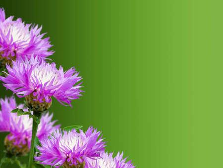 Photo pour cornflowers floral background for design - image libre de droit