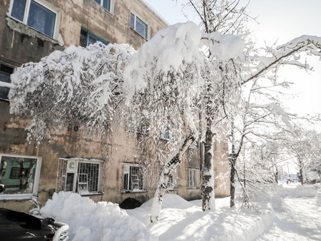 Big snow cover on a small tree