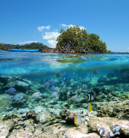 Surface and underwater view with mangrove island, kayak and tropical fish