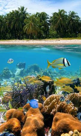 Underwater and surface view with beautiful beach and coconuts trees, coral reef and tropical fish, Caribbean sea