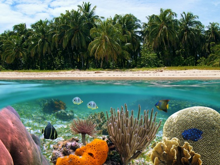 Underwater and surface view with beach and coconuts trees, coral reef and tropical fish, Caribbean
