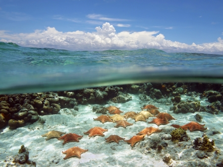 Split view with sky and clouds above, and underwater, many cushion starfish on sandy ocean floor