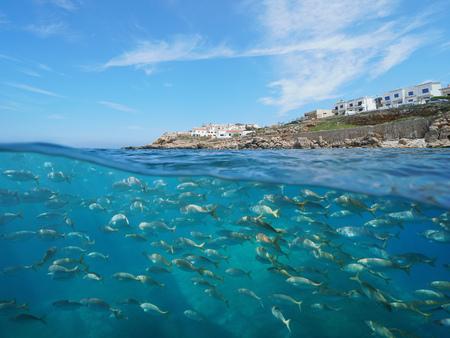 Photo pour Spain coastline with buildings near L'Escala town and a school of fish underwater, Mediterranean sea, Costa Brava, Catalonia, split view half over and under water - image libre de droit