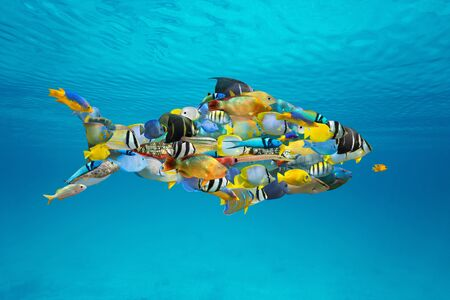 Photo pour School of colorful Caribbean tropical fish grouped together into a shark shape (digitally composed) in the sea under water surface - image libre de droit