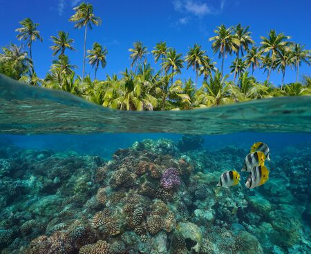 Photo pour Coral reef with tropical fish underwater and green foliage of coconut palm trees, split view over and under water surface, French Polynesia, Pacific ocean, Oceania - image libre de droit