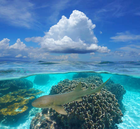 Photo pour Tropical seascape, blue sky with cloud and corals with a nurse shark underwater, split view over and under water surface, Caribbean sea, Panama, Central America - image libre de droit