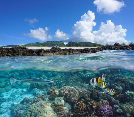 Photo pour Coral reef with tropical fish and island seashore, split view over and under water surface, south Pacific ocean, French Polynesia, Huahine - image libre de droit