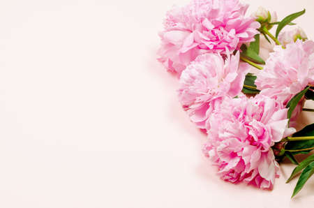 Photo for Beautiful pink peony flowers on pastel pink background with place for text. Holidays concept. Greeting card. Flat lay, top view, copy space - Royalty Free Image