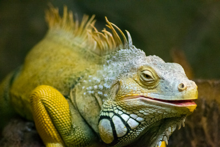 lizard   animals  reptile  pets  green reptiles