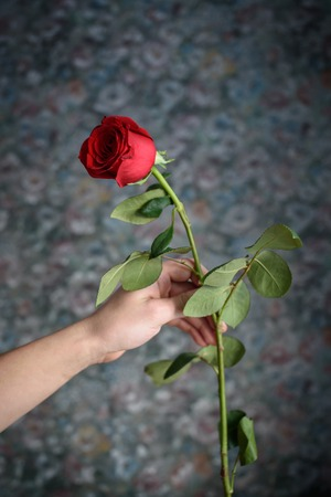 the red rose in the man hand for everyone.