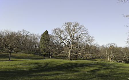 Rolling terrain in Roger Williams Park in early spring