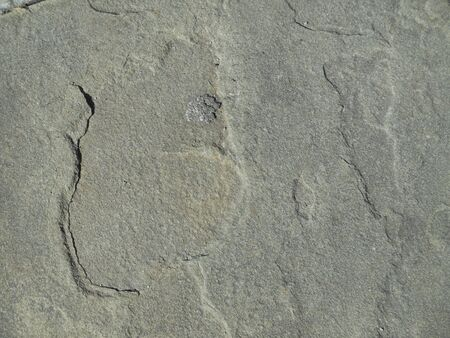 Photo pour Textured surface of pavement on city sidewalk - image libre de droit