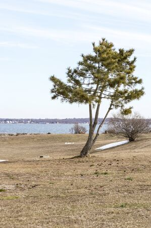 Photo pour Small pine tree in Fort Taber Park on first day of spring with Acushnet River in background - image libre de droit