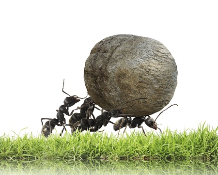 teamwork ,team of ants rolls stone uphill