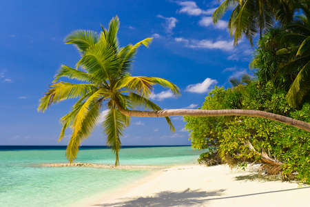 Bending palm tree on tropical beach, vacation background