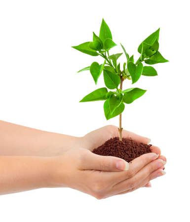 Photo pour Hands and plant isolated on white background - image libre de droit