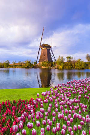 Photo for Windmills and flowers in Netherlands - architecture background - Royalty Free Image