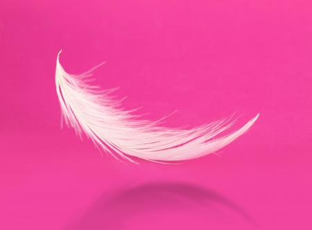 Flying white feather with shadow on pink background