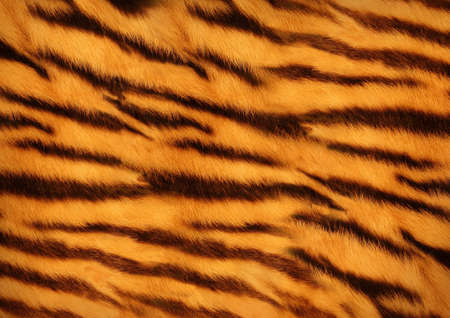 Photo for tiger skin - Royalty Free Image