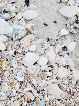 Seashell Pile Mural Wallpaper