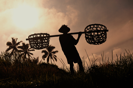 Farmer with wooden tool to prepare paddy field