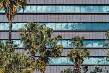 Photo pour Palm trees in front of the glazed windows of the facade of an office building - image libre de droit