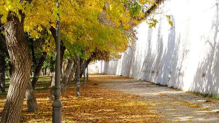 Photo pour Branches of trees with yellow foliage. - image libre de droit
