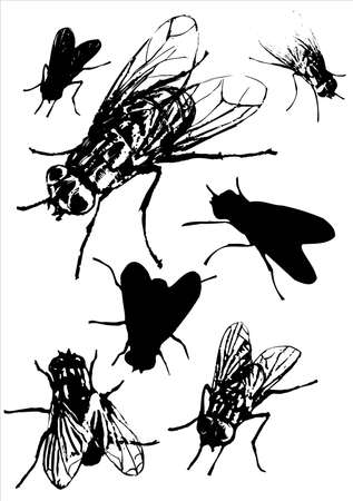 fly collection.This image is a vector illustration and can be scaled to any size without loss of resolution.